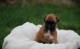 Bella mit 4 Wochen
