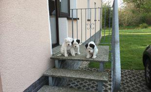 Mama hat gesagt wir können raus, nur nicht alleine die Treppen runter.