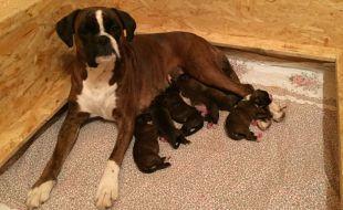 Quita mit ihren 6 Mädchen